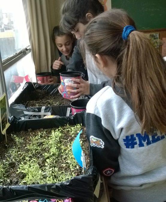 Huerta en el aula: 7º siembra